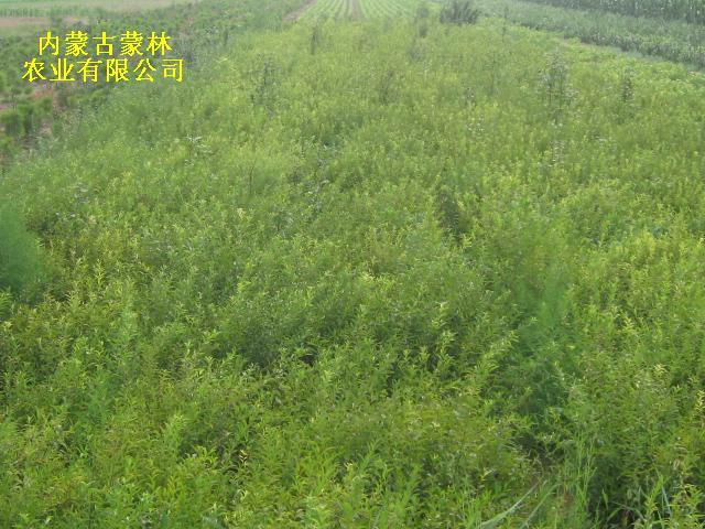 壁纸 成片种植 风景 植物 种植基地 桌面 640_480