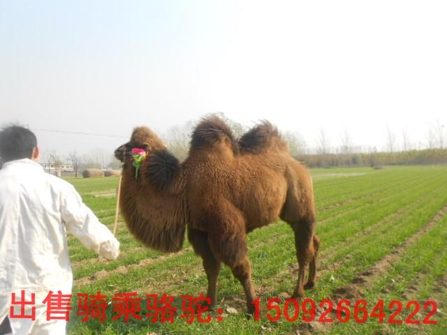 中國畫畫狗大王