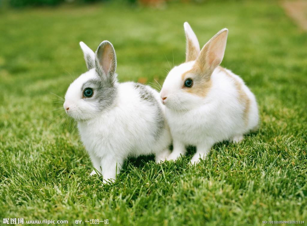 壁纸 动物 狗 狗狗 兔子 1024_755