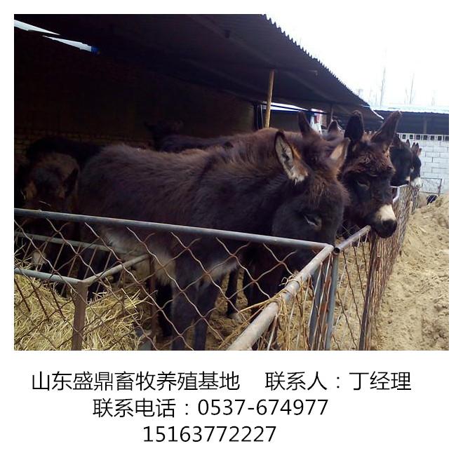 安顺驴养殖:关中驴、德州驴、肉驴、三粉驴、汉血马、精品马