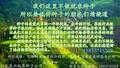 山东燕兴种业有限公司