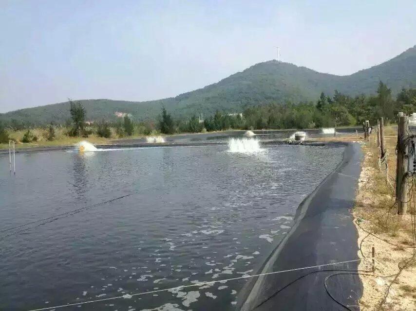 济南藕池风景图片