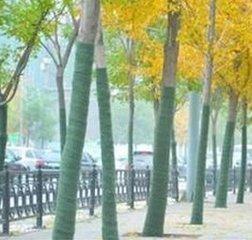 樹木保溫毛氈 綠色裹樹毛氈 裹樹布 樹木保溫綠色毛氈