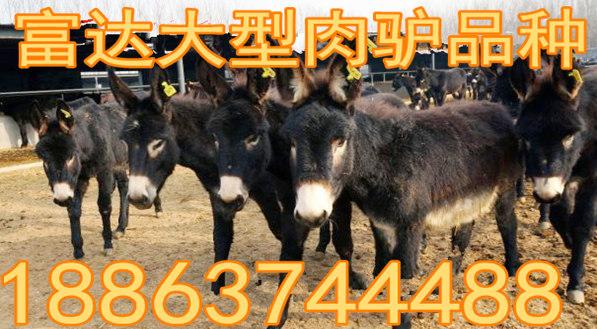 四川省攀枝花市三个月小肉牛犊价格