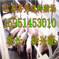 长春市藏香猪多少钱一斤