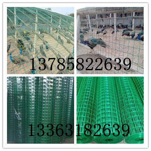 養孔雀綠色鐵絲網美觀實用、防腐蝕性強