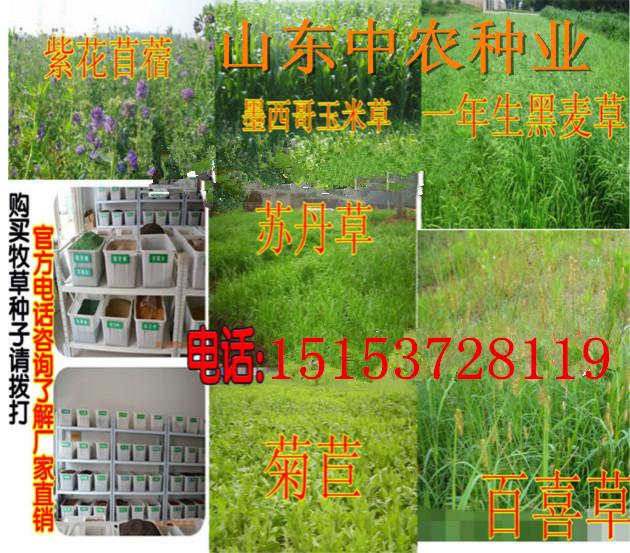 揭阳市哪里有鸡鸭牧草种子卖