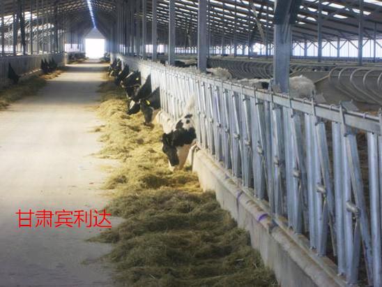 牛颈枷固定牛只提高奶产量甘肃宾利达厂家直销