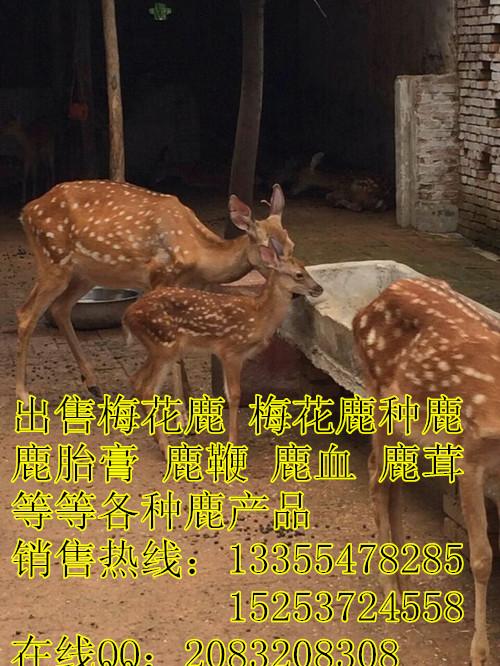 九江有关鸵鸟苗饲养技术渠县