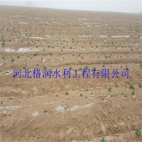 滴灌带水肥一体化项目廊坊永清县黑色滴水带销量领先
