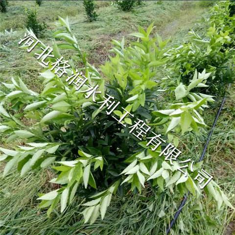 邢台小管出流节水灌溉项目果树滴灌PE管供应厂家