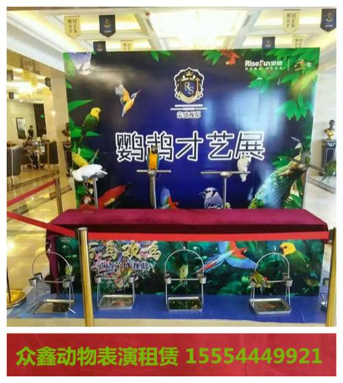 内江市附近哪里出租马戏团表演租赁