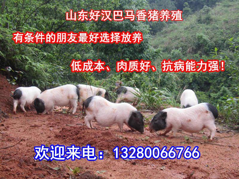 内蒙古巴彦卓尔香猪养殖场在哪里