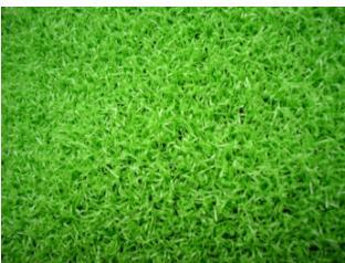 供甘肃草坪和兰州仿真草坪详情