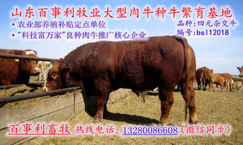 湖北黄冈蕲春县我要买肉牛