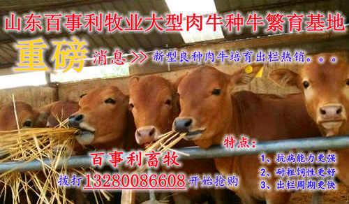 安*安庆大型养牛场