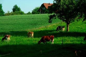 南乐县生态农业  可行性研究报告-行业新闻