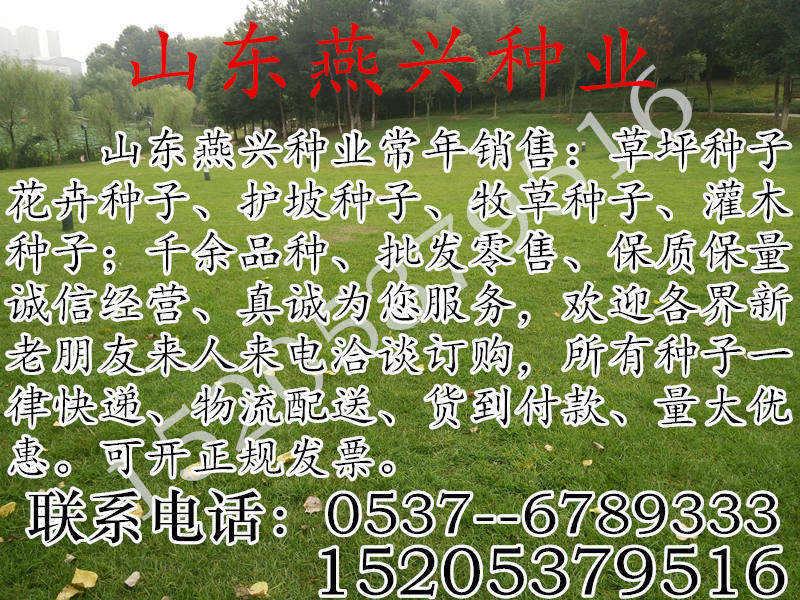 重庆市巫溪县绿化草坪种子哪里有卖的