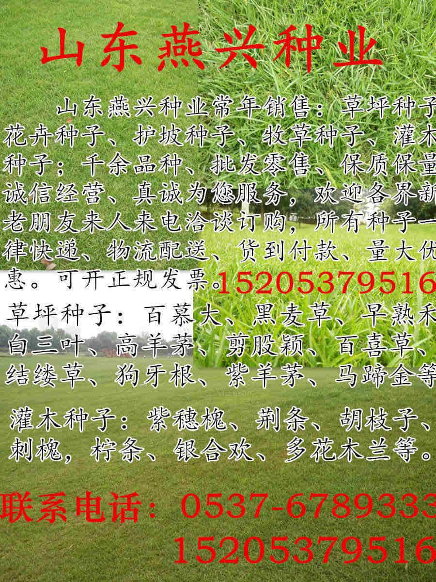 河南省开封市市护坡种草种子公司