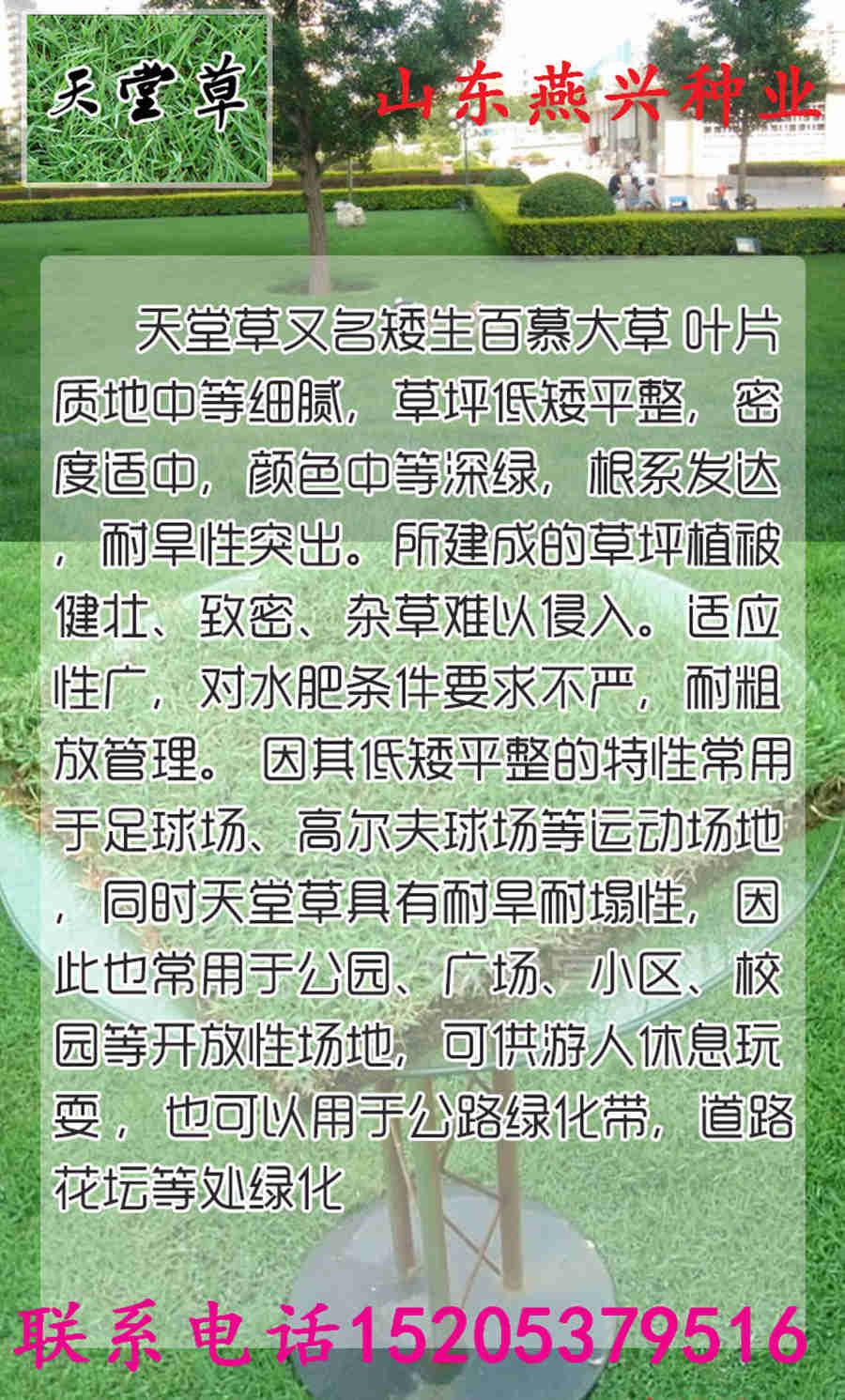 辽宁省鞍山市绿化草坪种子报价
