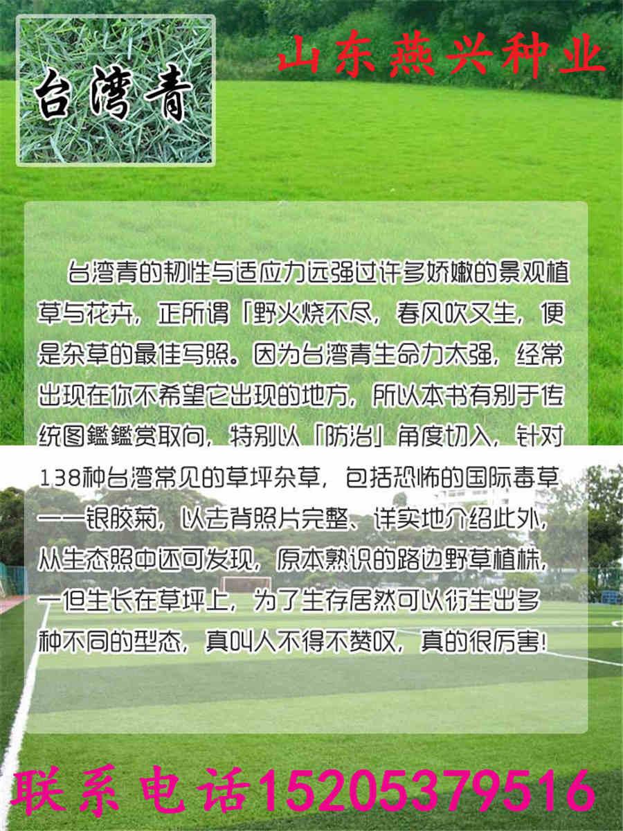 云南省保山市早熟禾种子多少钱一斤