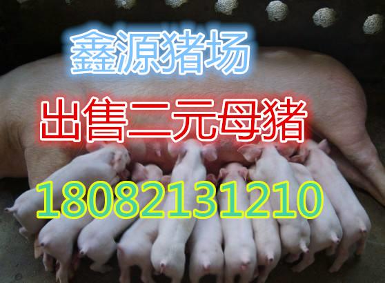 安顺苏太母猪市场价格