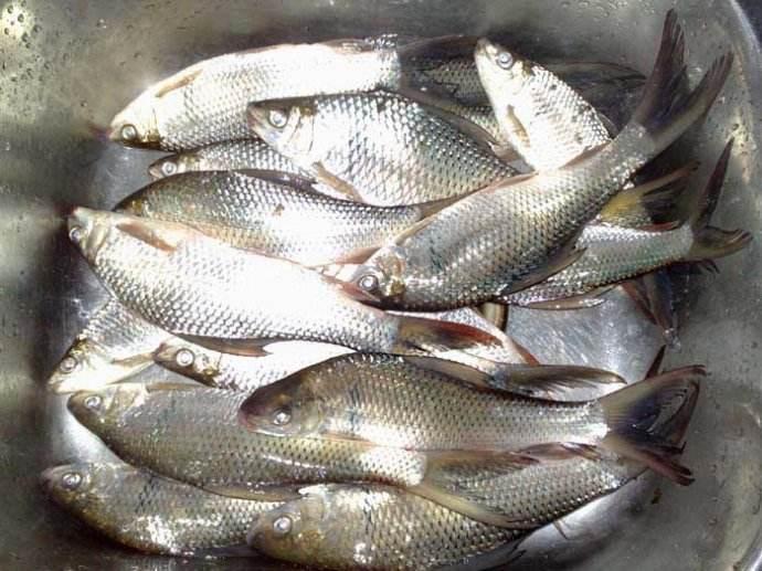 哪里有鲮鱼烘干机?用冷风来烘品相和风味会不会好些?