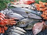 上海三文鱼进口报关清关代理