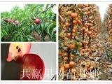 内蒙古赤峰雪桃树苗多少钱一棵卖