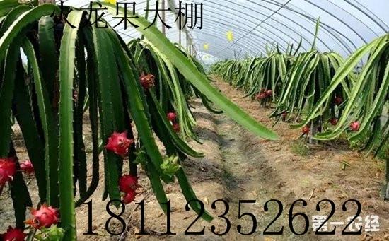 彭澤大棚管22-32大棚鋼管蔬菜大棚安裝