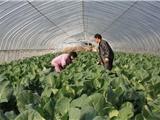 玉树治多蔬菜大棚三纵四卡10亩地造价多少钱?