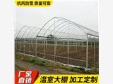 运城临猗温室大棚 连栋温室大棚  蔬菜温室大棚厂