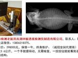 威海市检测老鼠用高清DR板检视检测仪制造万博体育mantbex登录