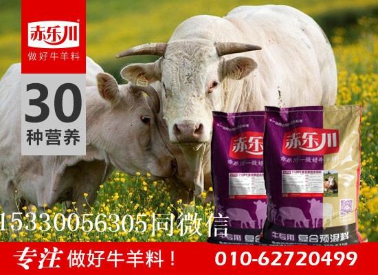 圈养繁殖母牛营养饲料