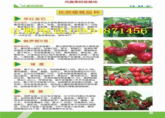 浙江衢州哪里有晚熟梨树多少钱