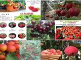 四川泸州卖樱桃树苗什么价格
