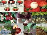 河北唐山卖苹果树苗什么价格