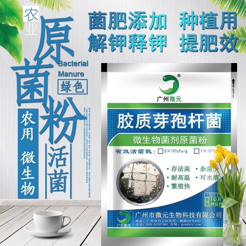 胶质芽孢杆菌200亿_农用胶冻样芽孢杆菌、广州微元胶质芽孢杆菌