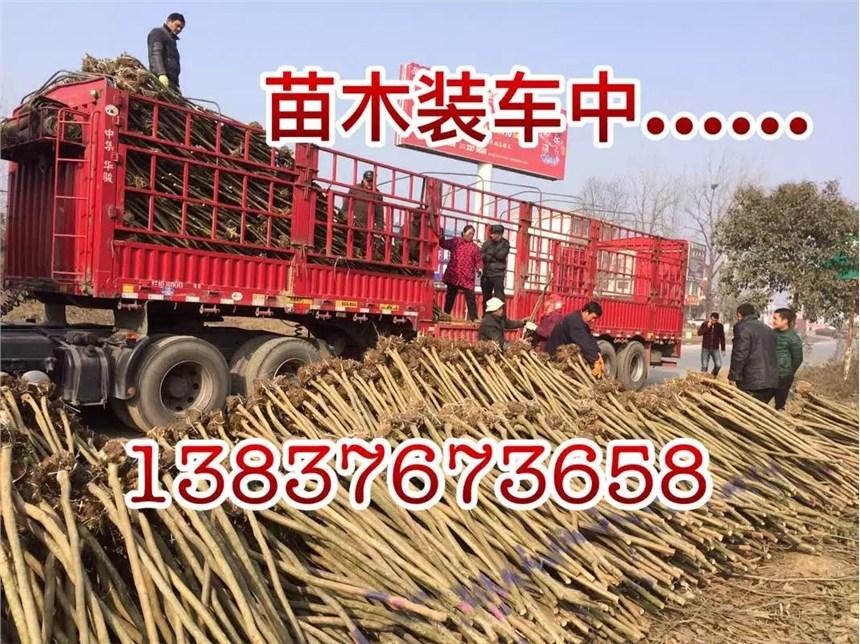 推薦:鄭州精品造型樹口碑推薦