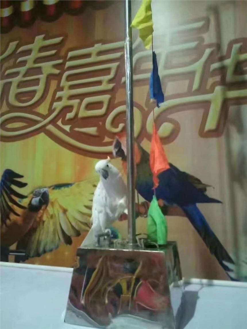 文圣区百鸟展本地供应商