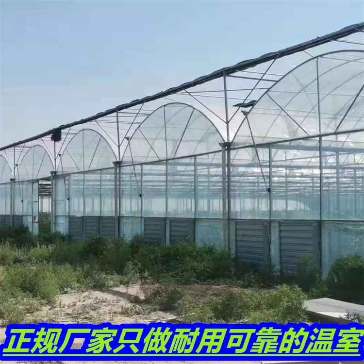 蔬菜大棚 香菇種植大棚價格 蔬菜連棟大棚廠家報價