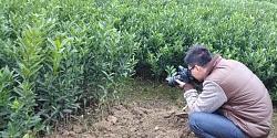 玉林哪里有贡柑苗批发