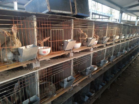 花5万元可以养殖多少只杂交野兔绥化市野兔养兔场