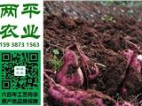 南平特产销售地址|土特产成本价格|当地农产品定制厂商【两平农业】