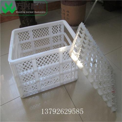 雞蛋運輸筐 鴨蛋運輸筐圖片 塑料隔板雞蛋筐