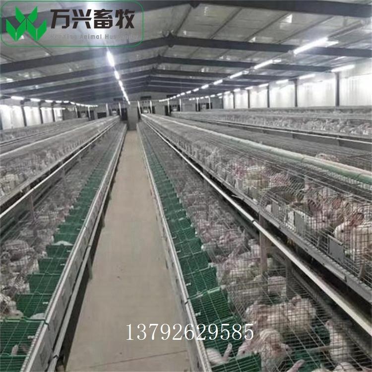 三層兔籠 12位商品兔籠 養殖場兔籠
