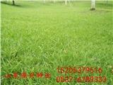 黑龍江黑河市護坡一公斤草籽能撒多少平方