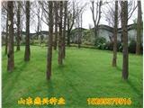 安徽滁州市护坡草籽播种方法