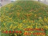 南平市四季青草坪种子怎么种