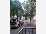 石景山永乐槐尺蠖农药喷洒防治专家